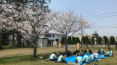 Pictures of cherry-blossom viewing1