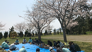 Pictures of cherry-blossom viewing2